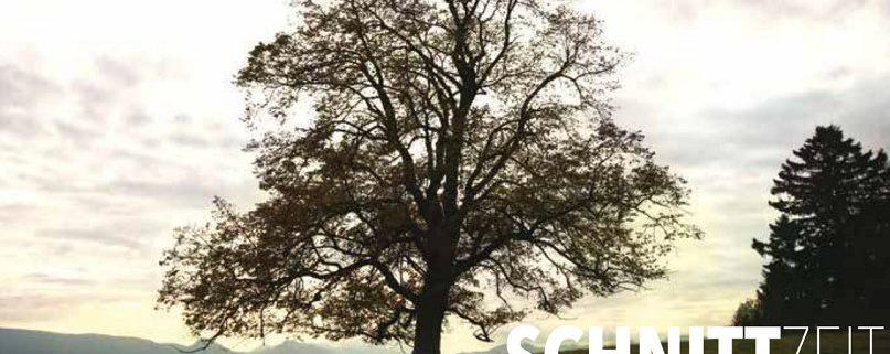 Kritische Betrachtung einer wissenschaftlichen Untersuchung zur Schnittzeit bei Bäumen