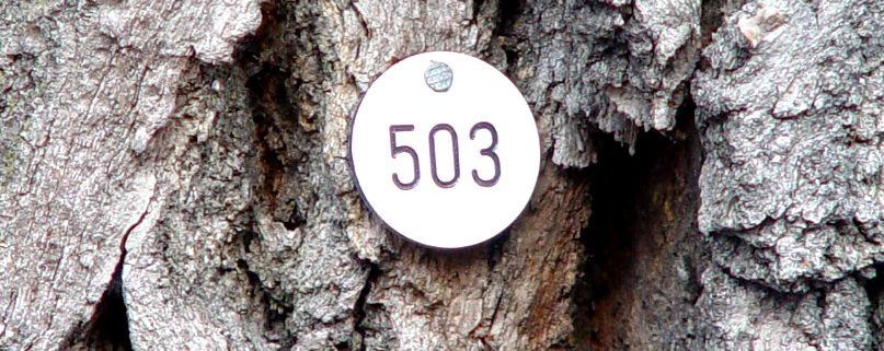 Regelmäßige Baumkontrollen sind Pflicht: Doch was heißt das genau?