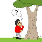 Wie oft Baumkontrolle?