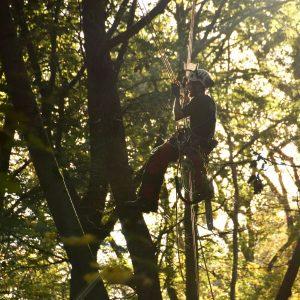Wie wird man professioneller Baumpfleger?