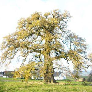 Starke Baumtypen: Ohne Kommentar (Annette Michel)