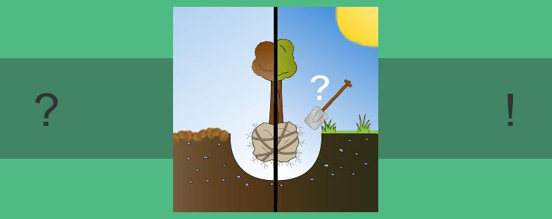 bester zeitpunkt um apfelbaum zu verpflanzen baumpflegeportal. Black Bedroom Furniture Sets. Home Design Ideas