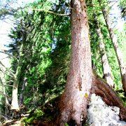 Starke Baumtypen: Starke Einheit