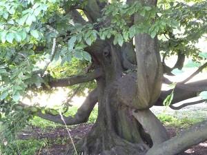 Starke Baumtypen: Elke Bienert, Baum-Elefant (Süntelbuche)