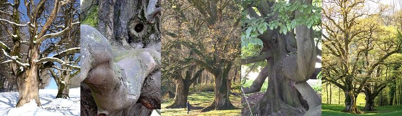 Starke Baumtypen: Baum-Elefant & Huteeichen