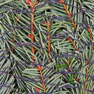 In ein Netz gepackter Weihnachtsbaum