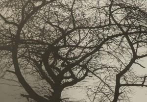 Starke Baumtypen: Obstbaum im Chaos