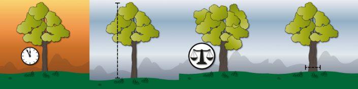Baum-Rekorde: Der Älteste, der Höchste, der Größte, der Dickste