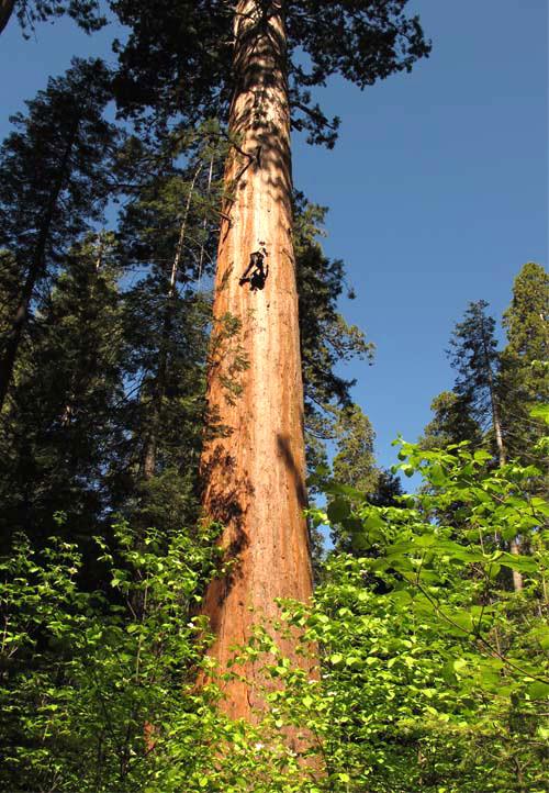 Starke Baumtypen im März 2016: Beeindruckende Solitär-Bäume 01