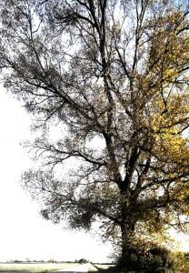 Starke Baumtypen im März 2016: Beeindruckende Solitär-Bäume