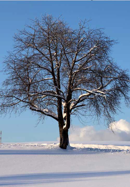 Starke Baumtypen im März 2016: Beeindruckende Solitär-Bäume 03