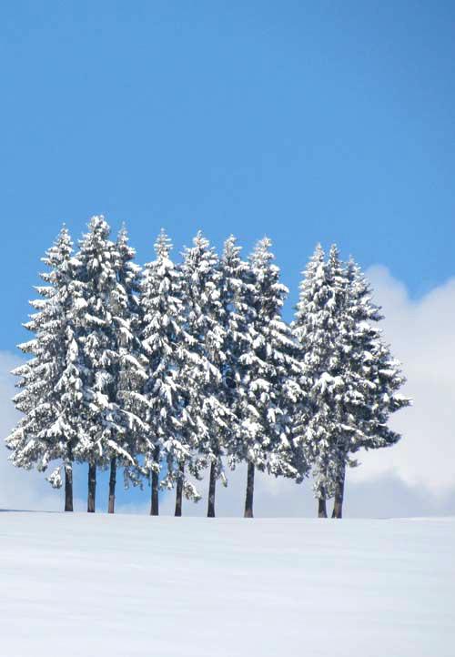 Starke Baumtypen im März 2016: Beeindruckende Solitär-Bäume 04
