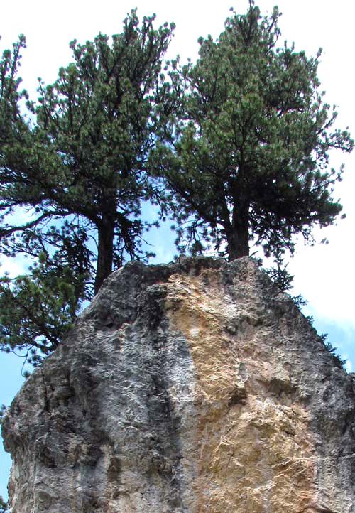 Starke Baumtypen im März 2016: Beeindruckende Solitär-Bäume 05