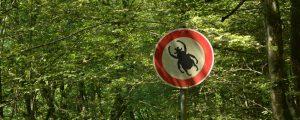Verbotsschild für Käfer vor einer Waldkulisse