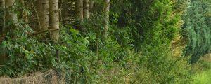 Verschiedene Bäume überwachsen Zaun