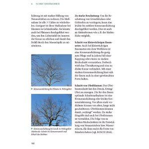 Auszug aus dem Buch Kronenschnitt an Bäumen