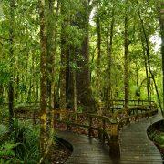 Weg aus Holzbrettern schlängelt sich durch den Wald
