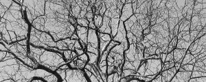 Äste eines Baumes ohne Laub