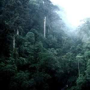 Enges steiles Bergtal dicht bewachsen mit vielen Bäumen