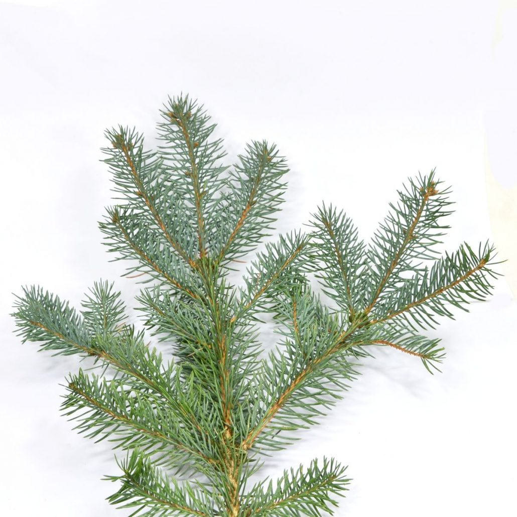 Weihnachtsbaum welche sorte