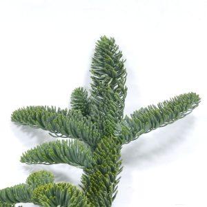 Zweig der Nobilis Tanne mit grünen Nadeln