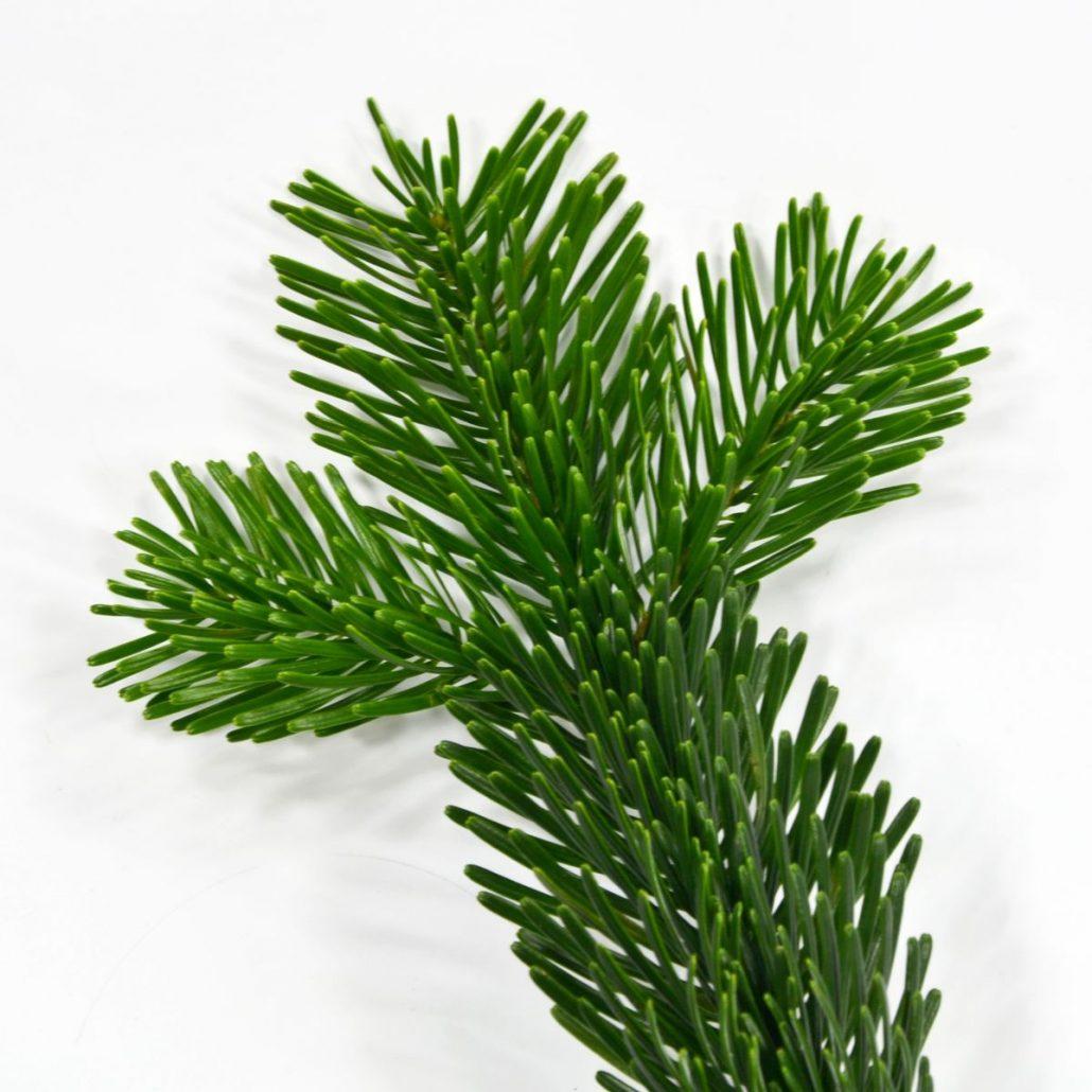 fichte tanne weihnachtsbaum sorten im vergleich. Black Bedroom Furniture Sets. Home Design Ideas