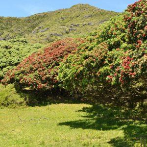 Reihe von dicht stehenden Bäumen mit roten Blüten