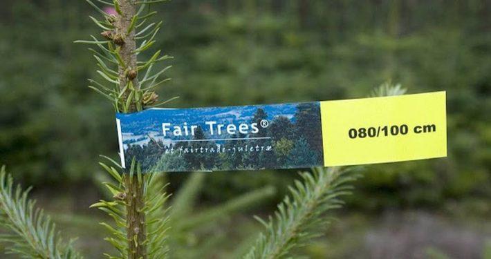Spitze eines Nadelbaumes mit einem bunten Etikett