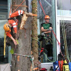 Puppe und Kletter an einem Baumstamm auf den Baumpflegetagen