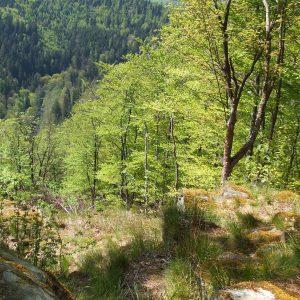 Steilhang mit Laubbäumen bewachsen