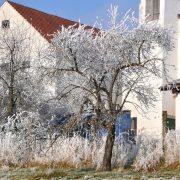 Eingefrorener Baum auf einer Wiese