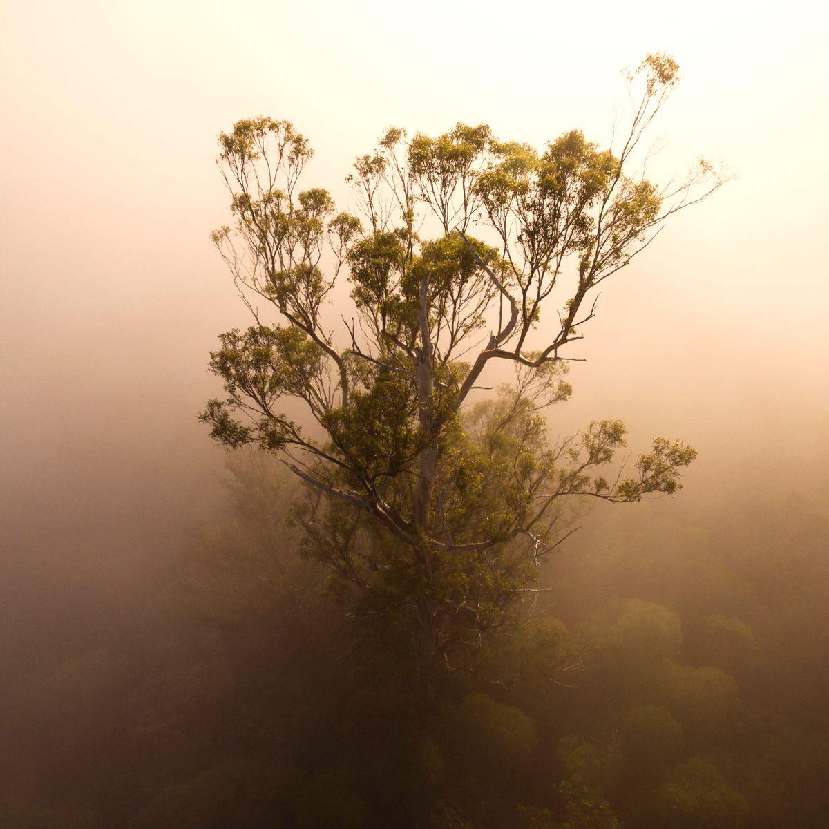 The Tasmanian Tree Project