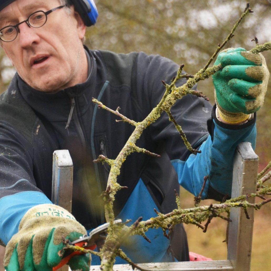 Fall Schnittverbote Bei Der Baum Geholzpflege Baumpflegeportal