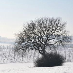 Einsamer Baum auf einer verschneiten Wiese