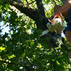Baumpfleger mit Kettensäge im Baum