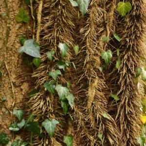 Dünne Stränge mit feinem Wurzelm an einem Baumstamm