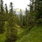 Kleines Bergtal mit vereinzelten Fichten.
