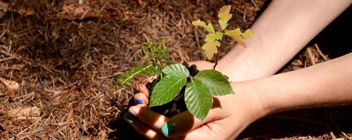 Baum pflanzen so geht s richtig baumpflegeportal for Baum pflanzen