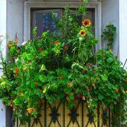 Von Grünpflanzen überwucherter Balkon