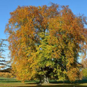 170119_Europaeischer-Baum-des-Jahres_CJD_1-1030x1030