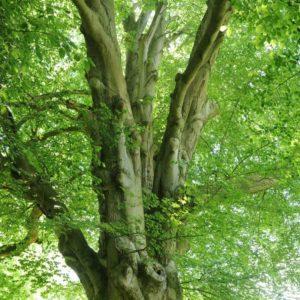 170119_Europaeischer-Baum-des-Jahres_CJD_2-1030x1030