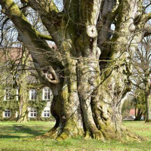 170119_Europaeischer-Baum-des-Jahres_CJD_3-1030x1030