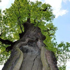 170119_Europaeischer-Baum-des-Jahres_Rafal-Godek_8-1030x1030