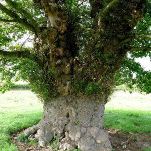 170119_Europaeischer-Baum-des-Jahres_Rob-McBride_5-1030x1030