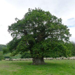 170119_Europaeischer-Baum-des-Jahres_Rob-McBride_6-1030x1030