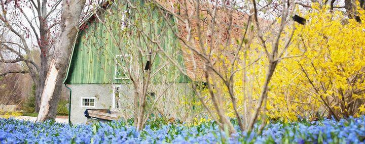 Garten mit alter Scheune, blauen Blumen und gelb blühendem Strauch