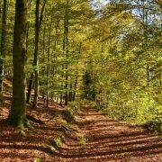 Waldweg voller Laub im Herbst