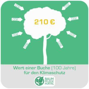 Baum der symbolisch CO2 aufnimmt