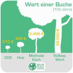 Verschiedene Werte eines Baumes von 210 bis 66000 Euro