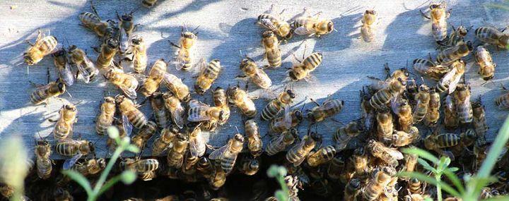 Bäume brauchen Bienen